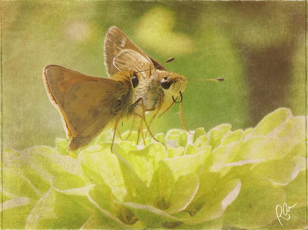 aTwoSkippers (3)-art-sig-resized.jpg