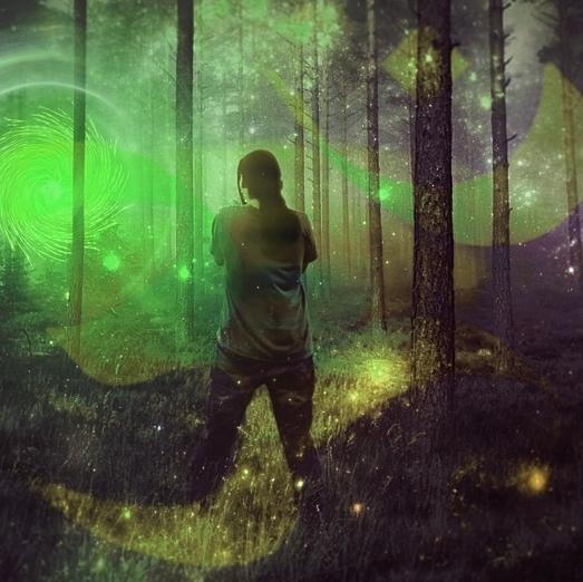 forest-764924_960_720.jpg
