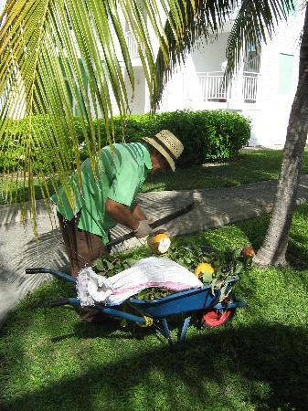 a-gardener-preparing.jpg