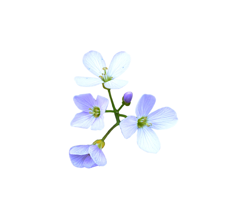 flowers_png_by_frankandcarystock-d7bpwpc.png