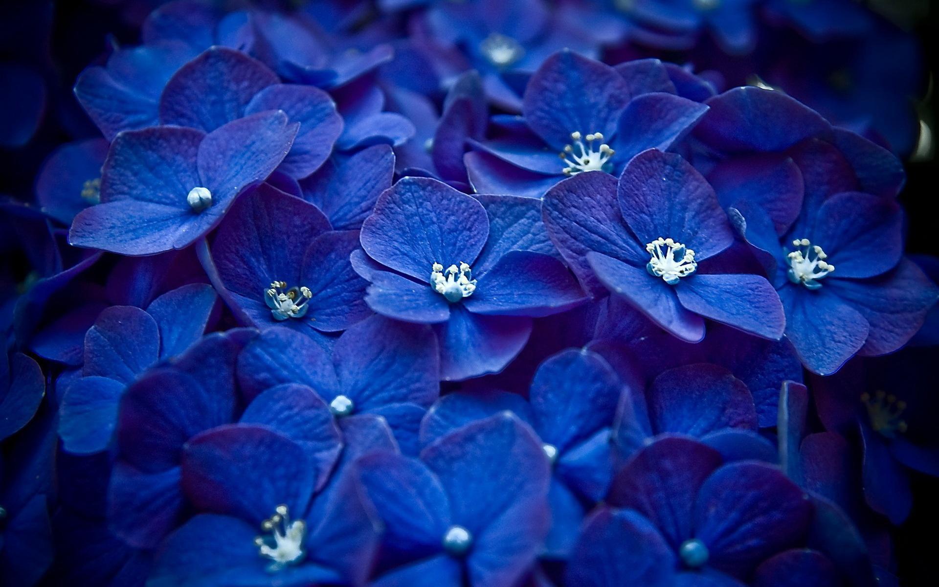 58166-blaue-rosen-hintergrundbilder-1920x1200-fuer-4k.jpg