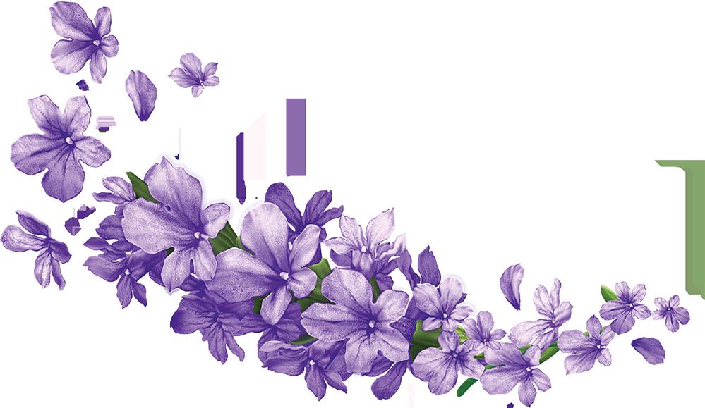 lavender-flower-clipart-5.png
