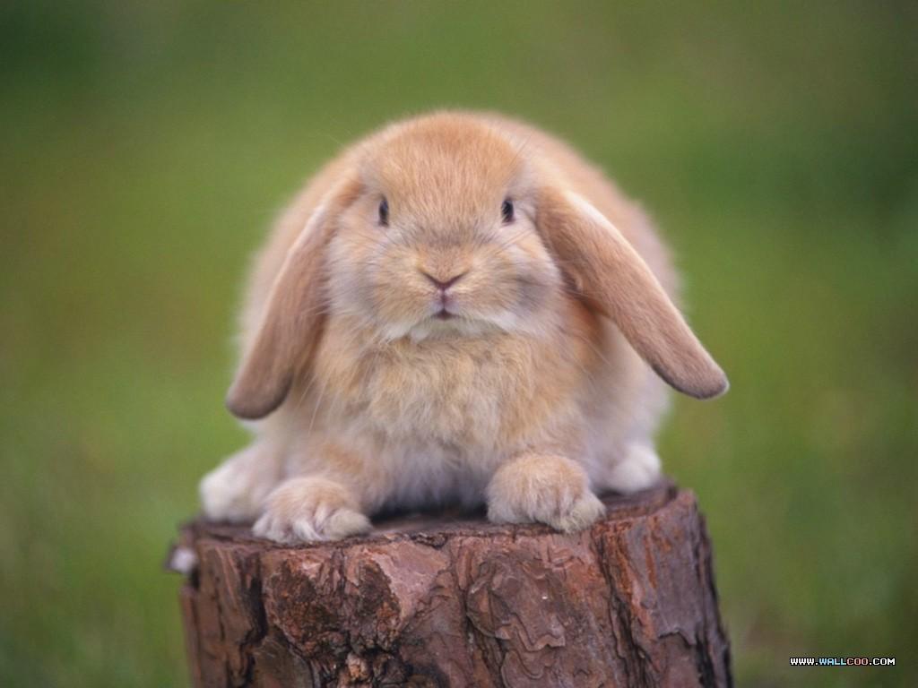 Kaninchen_auf_Baumstumpf.jpg