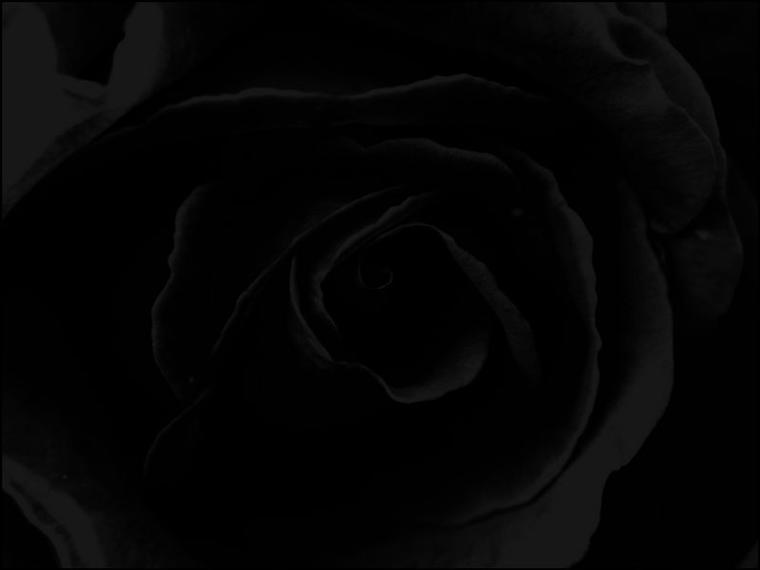 hintergrundbild-rose-schwarz_2.jpg