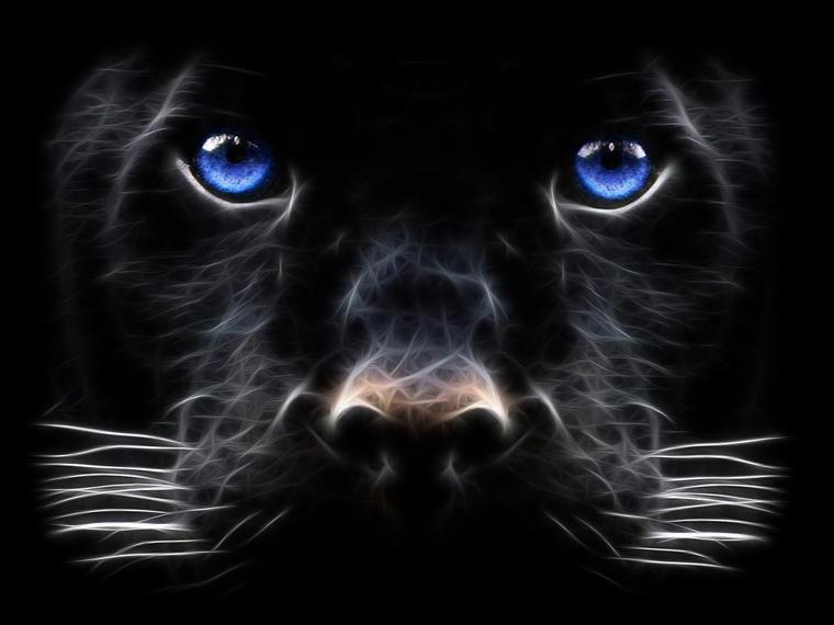 Tiger-black.jpg