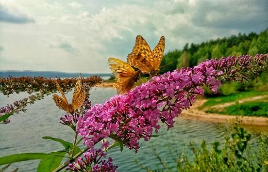 Schmetterling-k.jpg