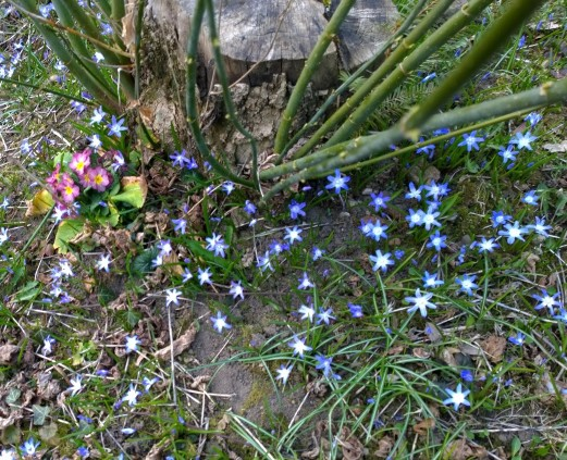Blumen_am_Weg.jpg