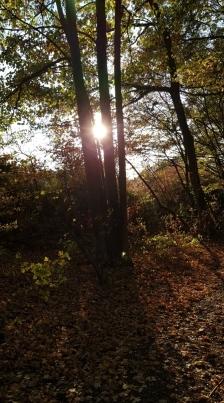 Herbstbilder_1.jpg