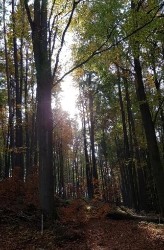 Herbstwald_.jpg