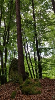 Waldwege.jpg