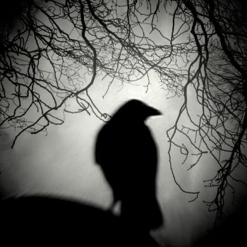 raven_watch_by_lostknightkg-d4oj0l4.jpg