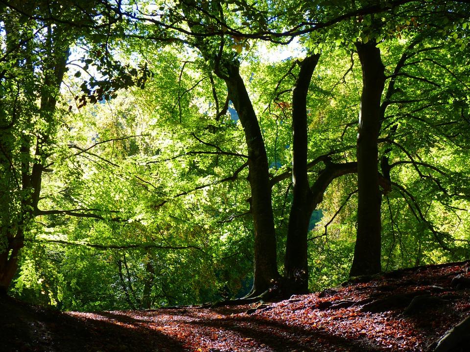 forest-10238_960_720.jpg