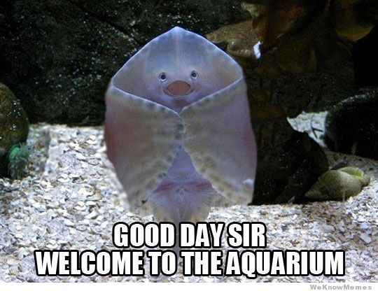 welcoming-stingray.jpg