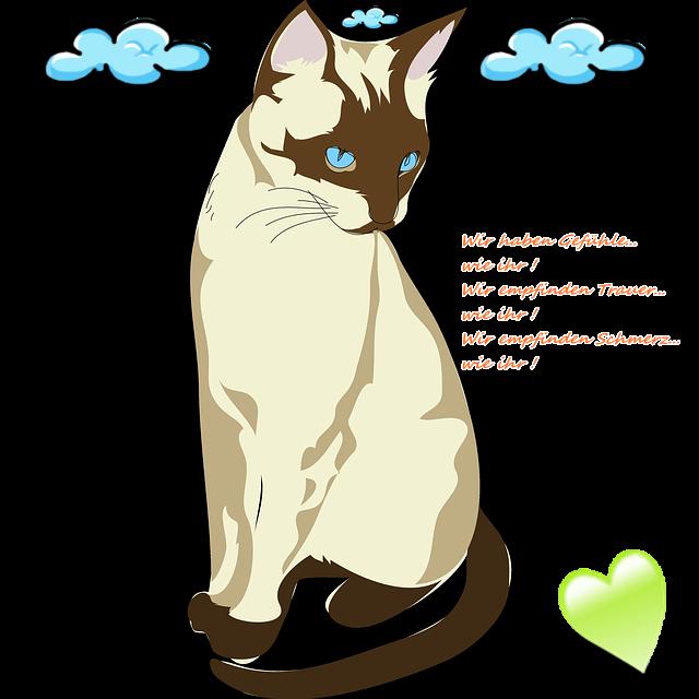 Katze6.png