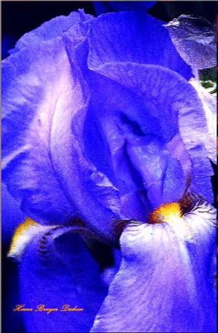 Iris_III_sig_scan1klein.jpg