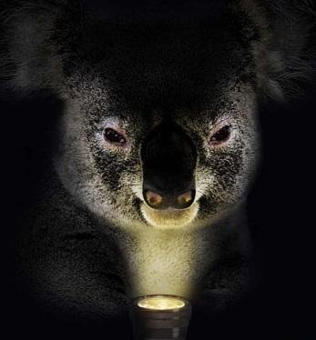 spooky_koala.jpg